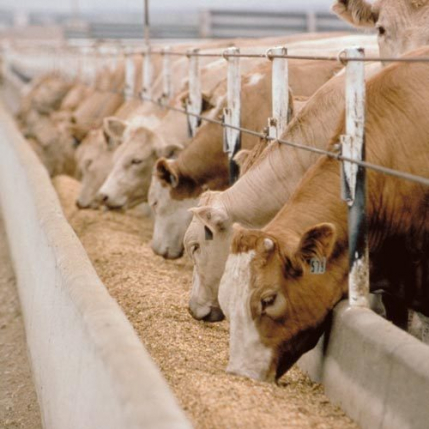 Manufacturing unit of Cattle feed products for sale in Hooghly, West Bengal