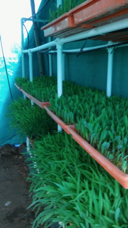 Well established Dairy Unit for Sale in Bangalore